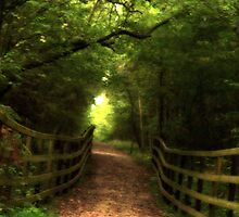 Wakerly Woods, Northamptonshire by Thomas Tolkien