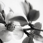 Colorless Spring by andrewjloftis