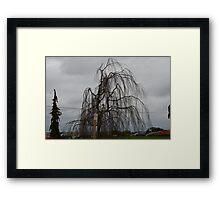 Valley Tree: Skagit Valley, Laconner Washington State Framed Print