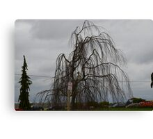 Valley Tree: Skagit Valley, Laconner Washington State Canvas Print
