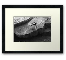 To Jump or not to Jump? Framed Print