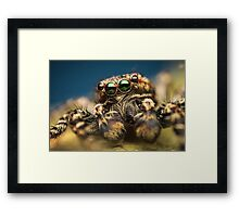 Marpissa muscosa male jumping spider high magnification photo Framed Print