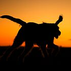 Sunset Silhouettes - Rich Miller calendar 13 by heidiannemorris