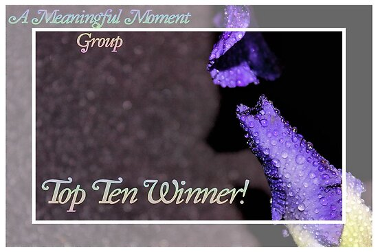 Banner - AMM - Top Ten Winner by aprilann