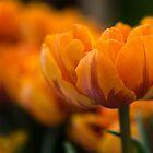 Orange   by Karen Havenaar