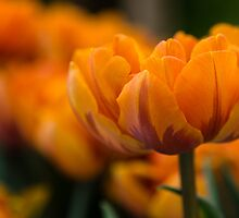 Orange   by Karen Havenaar