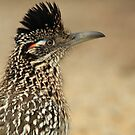 Roadrunner, Meep Meep  by NatureGreeting Cards ccwri