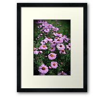 Purple Gerbera Framed Print