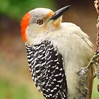 Just Another Pecker by lorilee