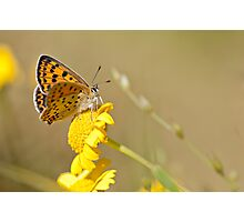 Little butterfly Photographic Print