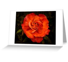 Aged Red Rose Greeting Card