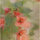 Memories/Twinspur by Lynn Starner
