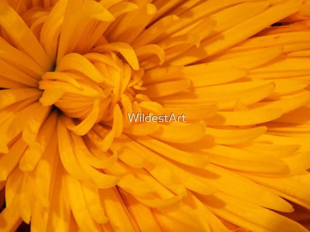 Yellow Mum by WildestArt