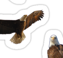 Dougherty Iowa Eagles 4 Sticker
