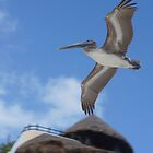 Pelican Crossing by AndyEllis82