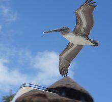 Pelican Crossing by AndyEllis82