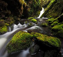 Rainforest Flow by Nick Skinner