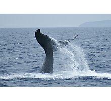 Humpback Tail Photographic Print