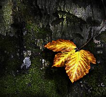 Autumn Detail by redtree