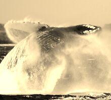 Breaching Humpback Whale by Katie Grove-Velasquez