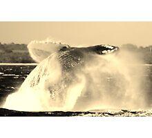 Breaching Humpback Whale Photographic Print