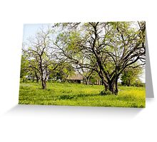 Blue Bonnet Fields Greeting Card
