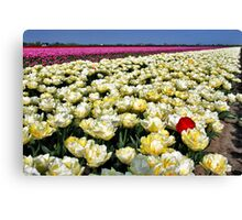 More tulips... Canvas Print