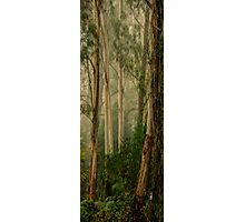 Guardians In The Mist- Mount Wilson, NSW Australia - The HDR Experience Photographic Print