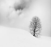 Peace by redtree