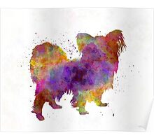 Papillon in watercolor Poster