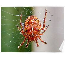 Spider after a Shower Poster