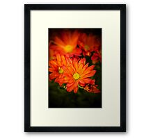 Orange Chrysanthemum Framed Print