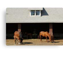 Foal Barn Canvas Print