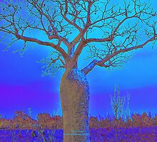Blue Boab tree by Mary Jane Foster