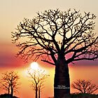 Boab Tree Sunset by Mary Jane Foster