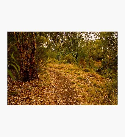 Merri Creek Path Photographic Print