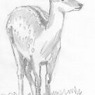 Deer by MikeJory