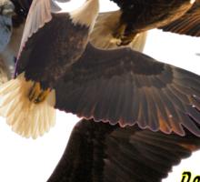 Dougherty Iowa Eagles 5 Sticker