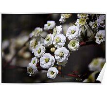 White Flowers IV Poster