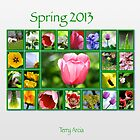 Spring 2013 by Terry Arcia