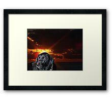 The Labrador Retriever Framed Print
