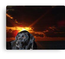 The Labrador Retriever Canvas Print