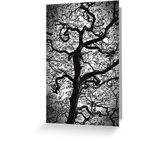 Twisted Tree Greeting Card