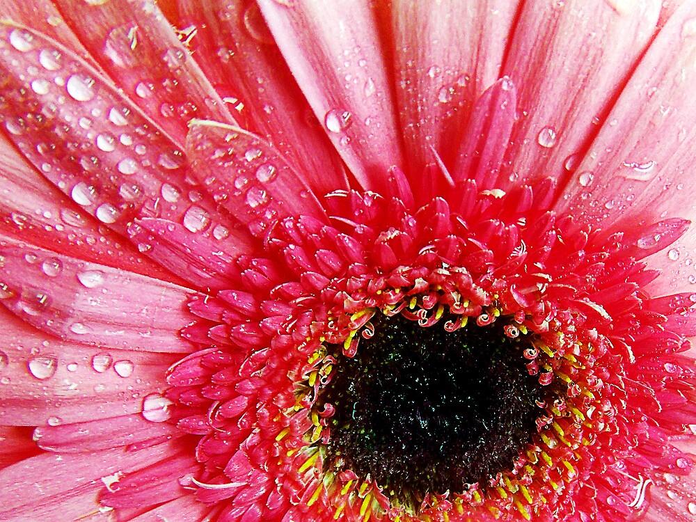 1051-pink gerber by elvira1