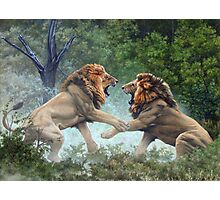 Lions fighting Photographic Print