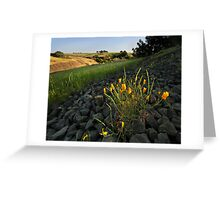 Late Poppies on North Table Mountains Greeting Card