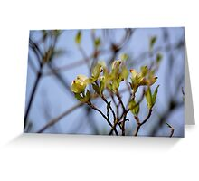 Dogwood Blossoms III Greeting Card