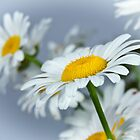 Happy Daisy by CathyS