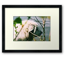 Goliath  Watching  Framed Print