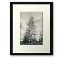 Birch Tree - Lou Campbell State Nature Preserve Framed Print